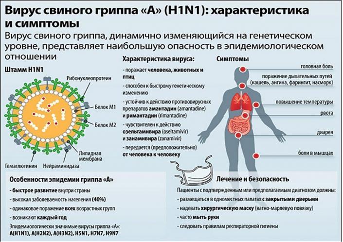 свиной грипп1