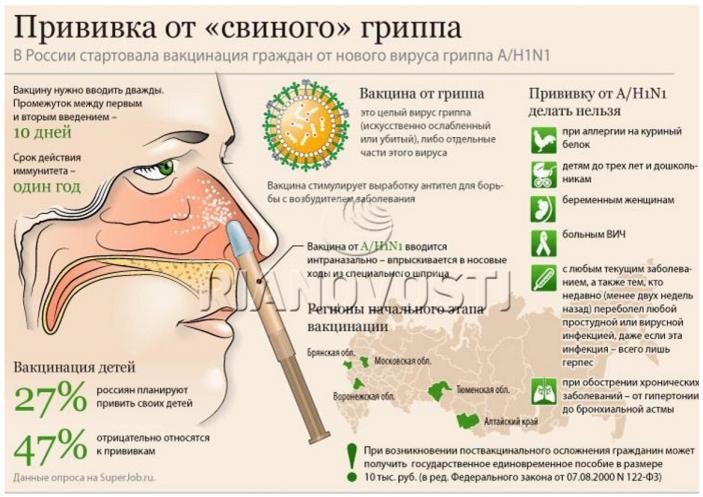 свиной грипп3
